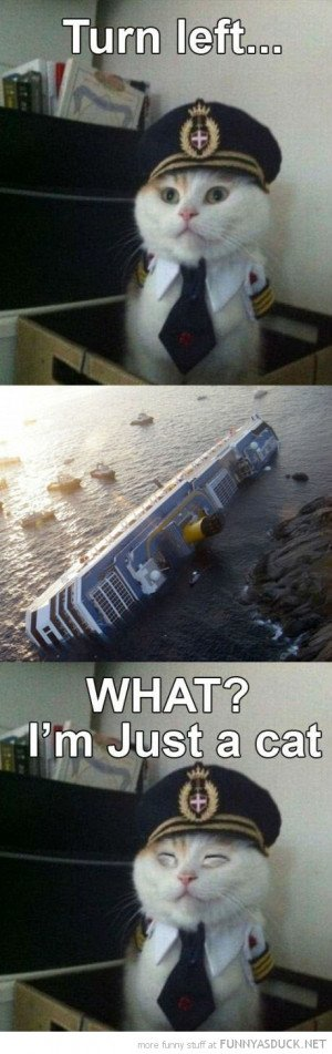 sailor captain cat lolcat animal sunken ship boat what funny pics ...