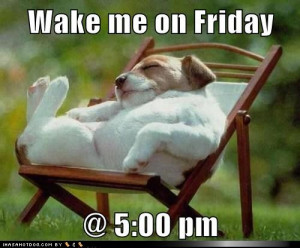 funny-dog-pictures-wake-me-on-friday-pm.jpg