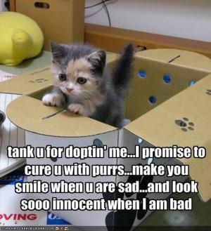 Kitten,Adoption,Innocence