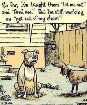 funny dog jokes Hilarious Cartoon Joke LMAO!