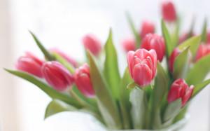 Download Tulips 2560x1600 Wallpaper