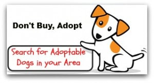 Cute Dog Adoption Sayings Puppy rescue adoption in your