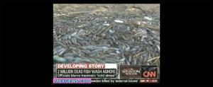 Another Massive Fish Kill Million Dead Wash Maryland