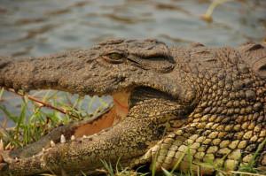 Crocodile Hunter Quotes