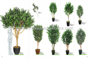 Search Results for: Indoor Olive Tree