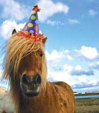 Bony Pony Blog