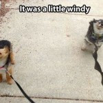 funny-picture-little-windy-150x150.jpg