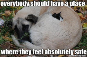 ... , Friends, Dogs, Funny Animal Pictures, Animal Quotes, Pets, Kitty
