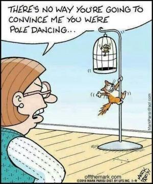 Cat humor pole dancing! #cat #humor #cats #funny #quotes #meme # ...