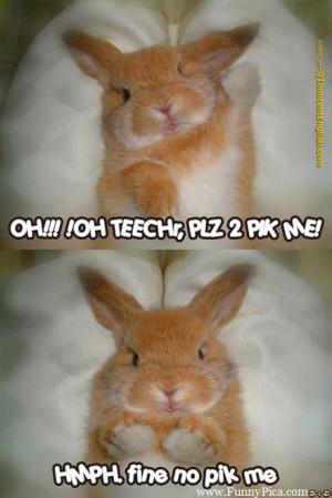 Funny Cute Rabbits – Funny Cute Rabbit Picture 077 (FunnyPica.com)
