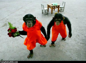 Monkeys-in-love - Return to Funny Animal Pictures Home Page