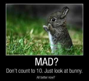 Funny Quotes about Life happy bunny