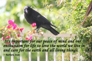 Peace of mind quote