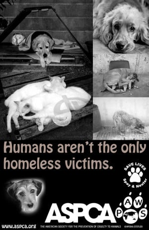 Help The Homeless Poster Homeless pet poster 1 by