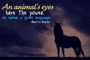 Inspirational Horse Quotes...