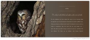Wisdom Owl Quotes