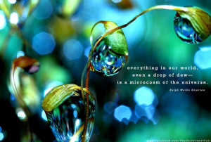 Everything In Our World, Even A Drop Of Dew Is A Macrocosm Of The ...