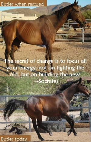 his abuse and neglect before he was rescued he wouldn't be the horse ...