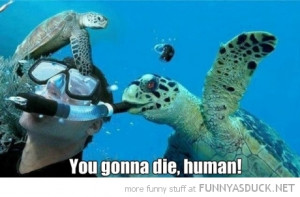 sea turtle blowing divers snorkel animal die human funny pics pictures ...