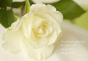 ... buds, quotes, nature, bud, flower, beautiful, lovely, rose, soft