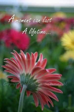 ... _gerbera_daisy_quote_poster-228684707229941492?rf=238222133794334761