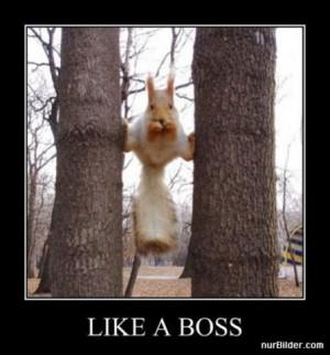 Funny Animals - Like A Boss (2)