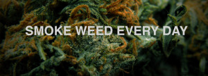 ... terms cannabis or marijuana. That is easy….because WEED is cool