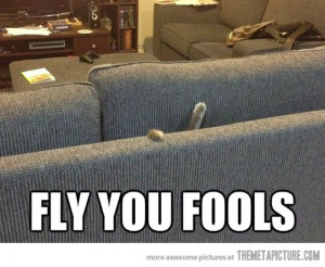 Funny photos funny cat fall couch fly you fools