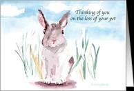 Quotes About Losing A Pet Rabbit ~ Loss of Rabbit Sympathy Cards from ...