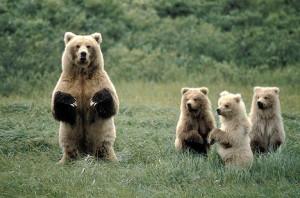 Sometimes Mama Bear needs to back off