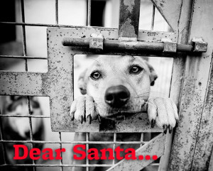 Dear Santa...please find all the homeless pets a home for Christmas