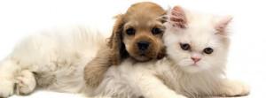 Cute-Cat-And-Dog-Friends.jpg