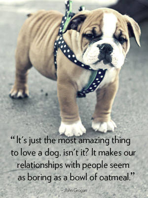 29 #Quotes #About #Dogs To Show You Why They're Man's Best Friend