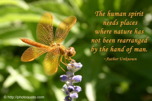 Dragonfly Quotes Image