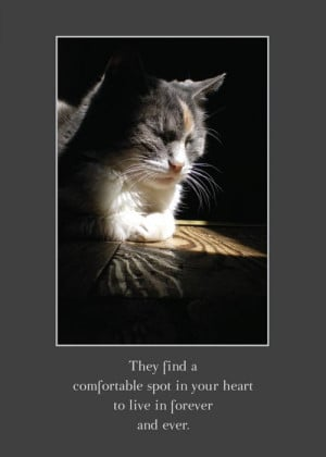 ... go directly to Animal Sympathy Cards page on the online Marketplace