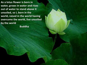 Lotus Flower Meaning Quotes: Lotus Flower Meaning Quotes,Car