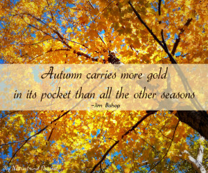 Autumn carries more gold. Beautiful fall quotes including this one ...