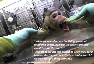 animal rescue animal abuse animal testing animal trafficking quotes ...