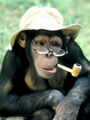 funny monkey pictures,funny monkey sayings