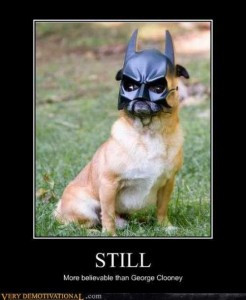 Funny Dog Pictures Bat Signal