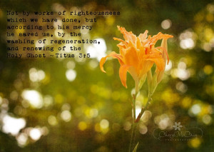 Tiger Lily, Bokeh, Quote