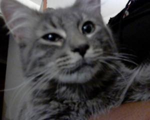 Cute Sweetand Playful Cat