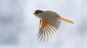 birds wallpaper flying images 1920x1080
