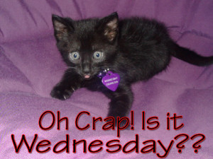 Hump Day Wednesday Cat Kitten MySpace Comments Image
