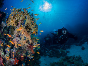 Jackfish Alley can be dived during your PADI Advance Course in Sharm ...