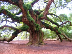 To the great tree-loving fraternity we belong. We love trees with ...