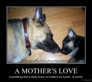 Bffs, Animal Mom, German Shepherds, Germanshepard, Love Quotes, German ...
