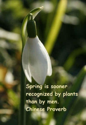 Spring famous quotes 10