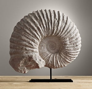 quotes on fossils quotesgram