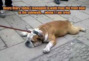 Dear Diary whew I am tired